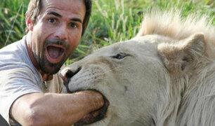 La arriesgada profesión de dentista de leones