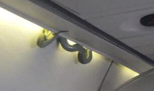 Serpiente sorprendió a pasajeros de avión en México