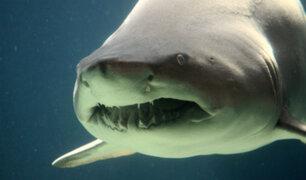 YouTube: Horrorizados turistas encuentran a un tiburón comiéndose una vaca en medio del mar [VIDEO]
