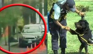 Surco: perro de la Brigada Canina frustró asalto