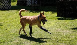 Pay de Limón: perro torturado por el cártel de Los Zetas ya está recuperado
