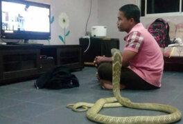 Por esta razón este hombre se casó con una serpiente en Tailandia
