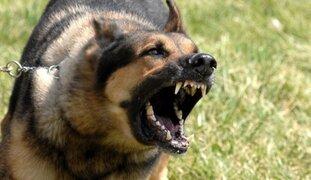 Preocupación en el mundo por incremento de ataques de mascotas