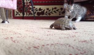 Facebook: adorable juego de un gatito con una tortuga enternece a miles
