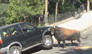 YouTube: toro furioso atacó a una familia en su camioneta