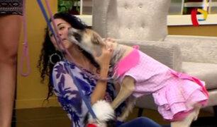 Combinado: Mascota de Georgette Cárdenas se pasó de cariñosa e hizo caer a Adriana