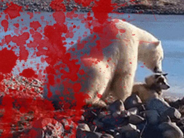 Verdad que mata: la desgarradora realidad detrás del tierno viral del oso polar y el perro