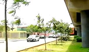 San Borja: talan 29 árboles en la avenida Aviación