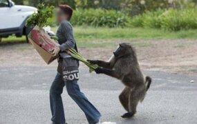 Animales ladrones que fueron sorprendidos con las manos en la masa