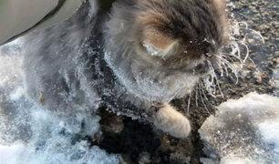 YouTube: Un gato se congeló y quedó pegado al suelo, su impactante rescate se volvió viral [VIDEO]