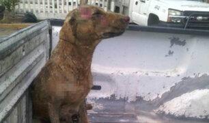 FOTOS: perrita sufre graves quemaduras al intentar salvar a sus cachorros
