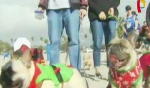 EEUU: mascotas participan en desfile con llamativos trajes navideños