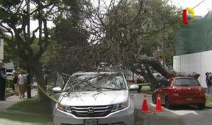 Enorme árbol cae sobre camioneta en San Isidro
