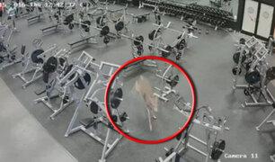 Venado irrumpe en un gimnasio de Carolina del Sur