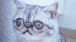 Hilarantes imágenes del gato que siempre está asustado
