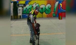 Los Olivos: perro maltratado luce recuperado y apoya en tareas de fiscalización