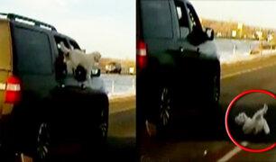 EEUU: perro cae de vehículo en movimiento y vive de milagro