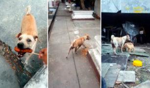 Perrita hace de todo para recolectar comida para sus cachorros