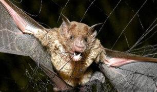 Cusco: Aparecen más casos de rabia silvestre