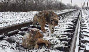 VIDEO: perro arriesga su vida para proteger a su compañera de trenes en marcha