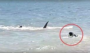 YouTube: valiente perro se enfrenta a tiburón y salva a sus dueños