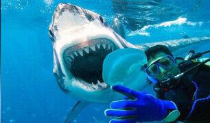 Florida: buzos tiene escalofriante encuentro con un tiburón tigre
