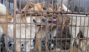 China: excluyen por primera vez a perros y gatos de lista de animales comestibles