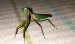Facebook: Encuentra un aterrador insecto en su cuarto y esto es lo que pasa [VIDEO]