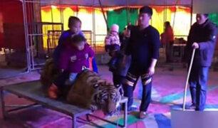 VIDEO: tigre es atado para que asistentes lo monten y se tomen fotos