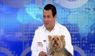 Golpe de calor: sepa cómo darle mayor cuidado a sus mascotas en verano