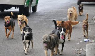 Arequipa: eutanasia para perros callejeros por rabia