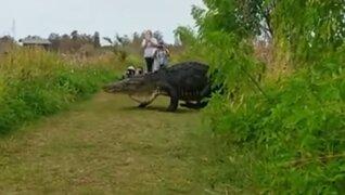 Enorme cocodrilo aterrorizó a turistas en Estados Unidos