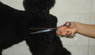 Recompensa a quien identifique a persona que cortó orejas y la nariz a un perro