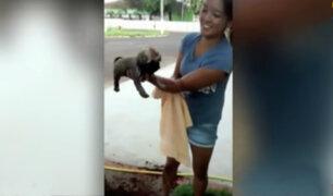 Brasil: rescatan a perro atrapado en una tubería subterránea
