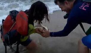 VIDEO: tiburón muerde a mujer que intentó tomarse un selfie con él