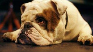 Se incrementa uso de cannabis para tratamiento de mascotas en Estados Unidos