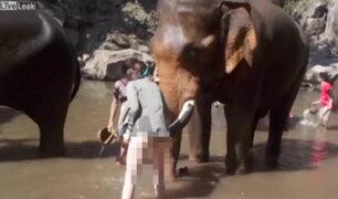 Impactantes imágenes: elefante furioso lanza a turista por los aires