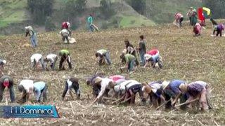Comuneros realizan tradicional festival del arado en Huari