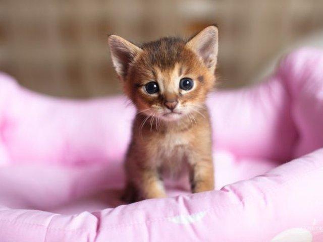 Día Internacional del Gato: razones por las que deberías tener esta mascota