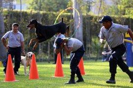 Parque de las Leyendas: Brigada Canina de la MML realizará sorprendentes demostraciones