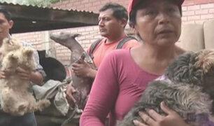 Huarochirí: mujer junto a su familia adoptó a más de 70 perros