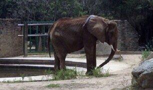 Venezuela: zoológico rechaza ayuda para elefanta desnutrida