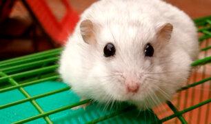 Crean droga que revierte envejecimiento en ratones