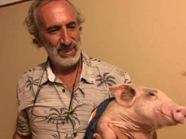 Hermano de Natalia Málaga rescató a un cerdito llamado 'Huayquito'