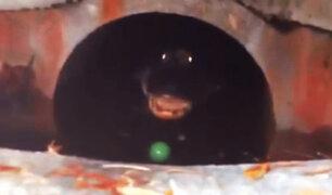 Se llevó el susto de su vida al intentar rescatar pelota del alcantarillado