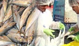 Carapongo: se vende caballa a un sol el kilo por Semana Santa