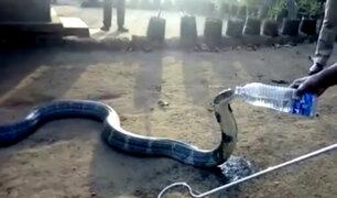 India: pobladores salvan así a las cobras de intensa sequía