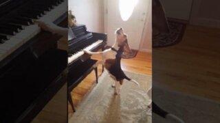 Este perro 'cantante' se está convirtiendo en toda una celebridad en Internet
