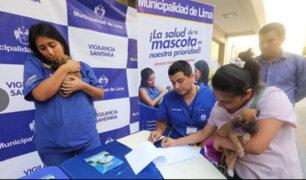 Municipio de Lima entrega en adopción a mascotas rescatadas