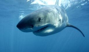 Actriz porno fue atacada por tiburón durante grabación de un comercial